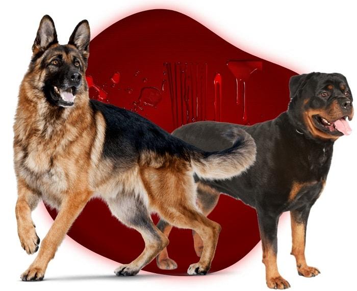 خرید انواع نژاد های سگ نگهبان