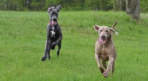 دو سگ در حال تمرین کردن