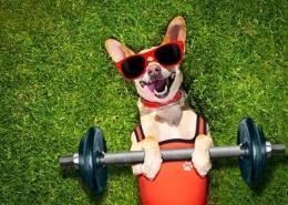 سگ هر روز به چه میزان ورزش نیاز دارد؟