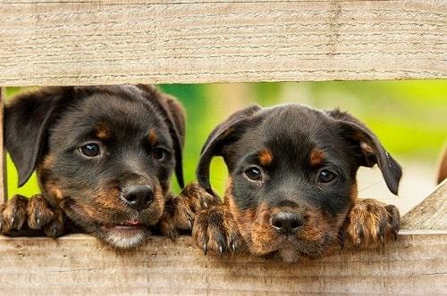چه نوع توله سگی برای شما مناسب تر است؟