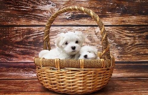 چه مواردی را قبل از خرید توله سگ باید بدانید