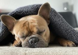 چرا سگ ها زیاد می خوابند؟