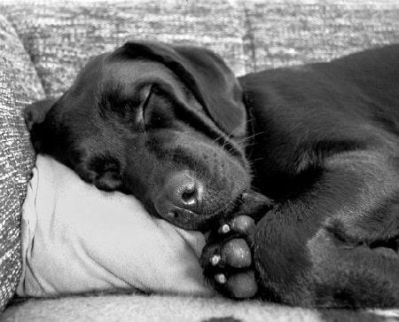 سن و اندازه سگ
