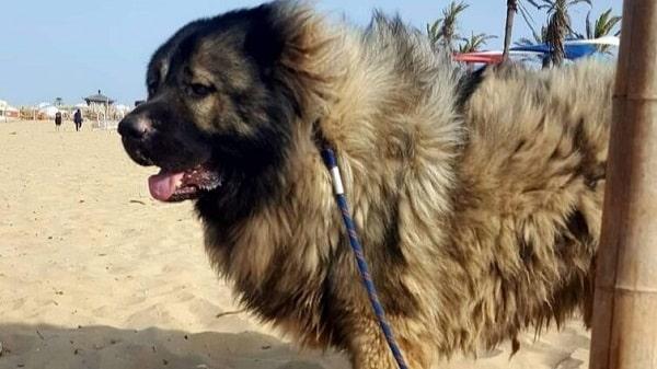 فروش سگ سرابی
