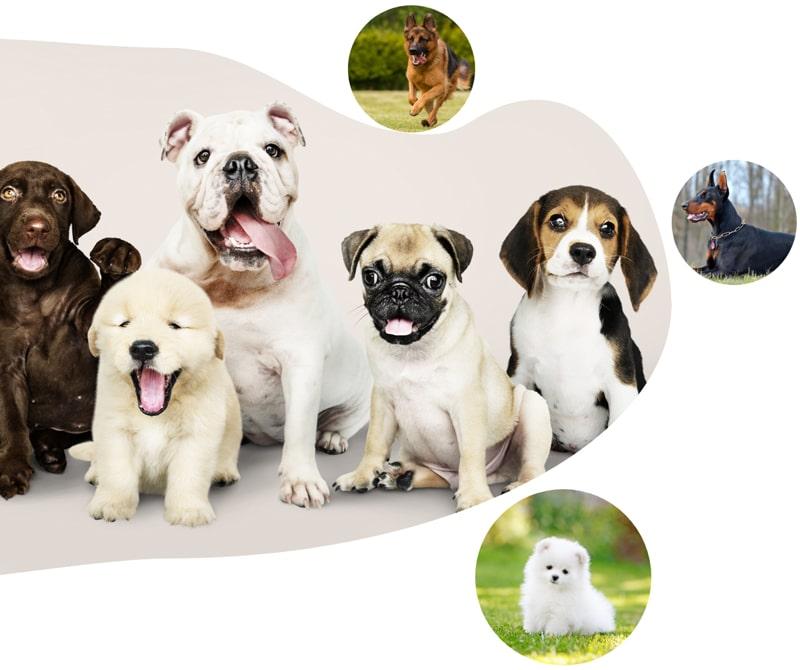 خرید انواع نژاد های سگ