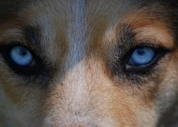 آیا سگ ها می توانند در تاریکی ببینند؟