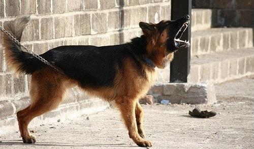 پارس کردن سگ در شب ها