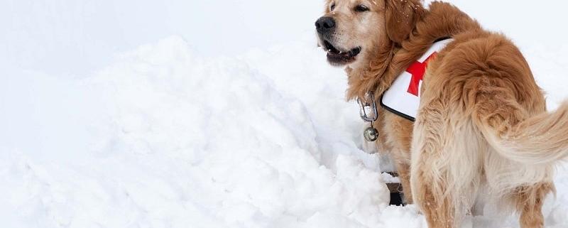 بهترین سگ های جستجو و نجات