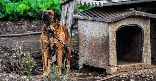 چگونه پارس سگ های خود را کنترل کنیم