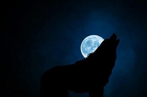 سگ در حال پارس کردن در نور ماه