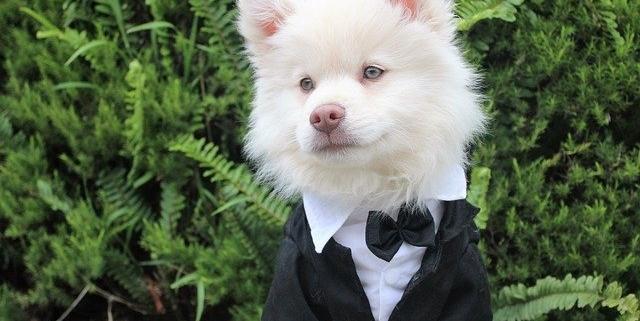 باهوش ترین نژاد های سگ در دنیا