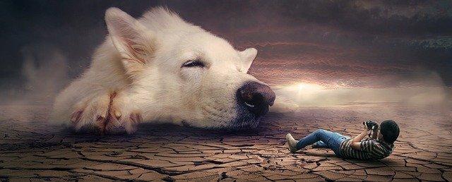 بزرگترین نژاد های سگ در دنیا