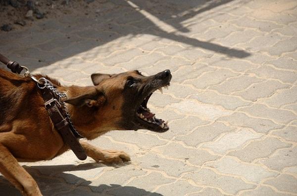 هشدار دادن سگ