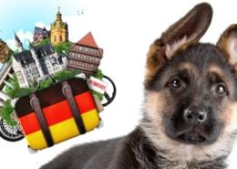 سگ های مطلق به کشور آلمان