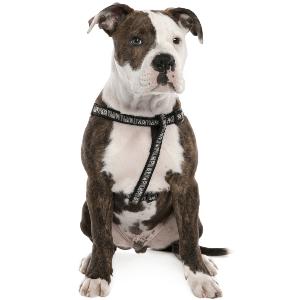خرید سگ بولداگ امریکایی
