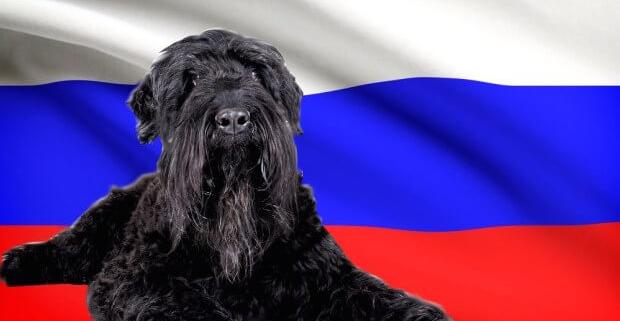 سگ های متعلق به کشور روسیه