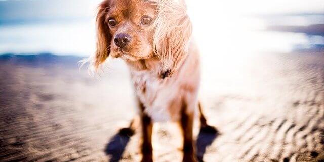 بهترین نژاد های سگ مناسب برای اب و هوای گرم