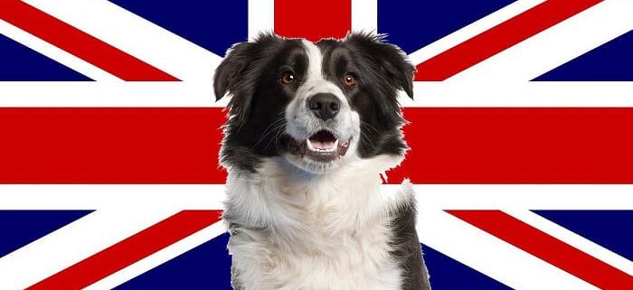 سگ های متعلق به انگلستان