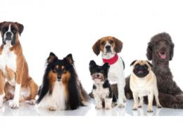 محبوب ترین سگ های دنیا