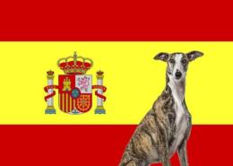 سگ های متعلق به کشور اسپانیا