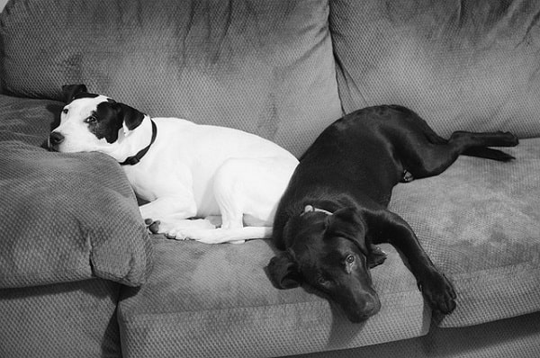 تفاوت های هورمونی در سگ ماده و نر