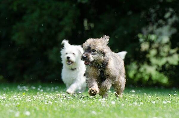 تفاوت سگ نر با ماده از نظر رفتاری