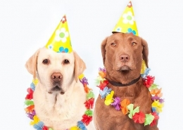 بهترین سن برای خرید سگ