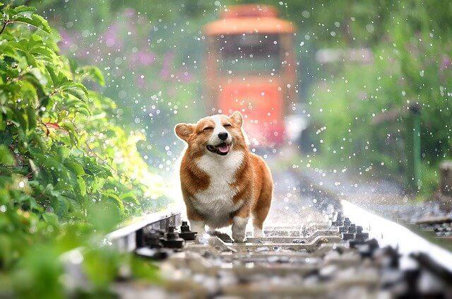 سگ زیر بارون