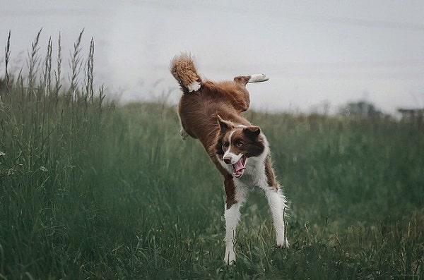 سگ در بازه سنی دوسالگی بسیار پرانرژی