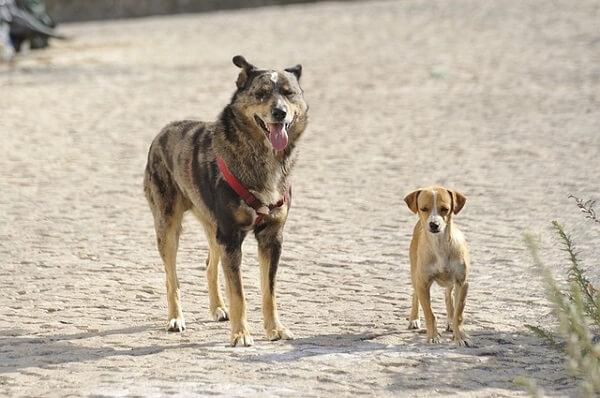 دو سگ در سایز بزرگ و کوچک