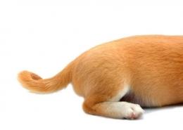 چرا سگ ها دم تکان می دهند