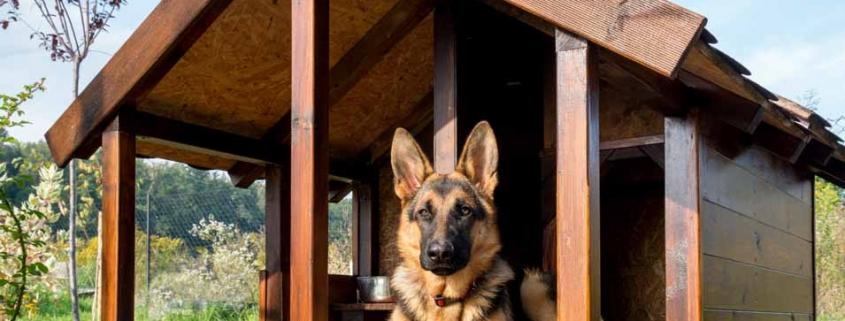 نگهداری سگ خارج از حانه