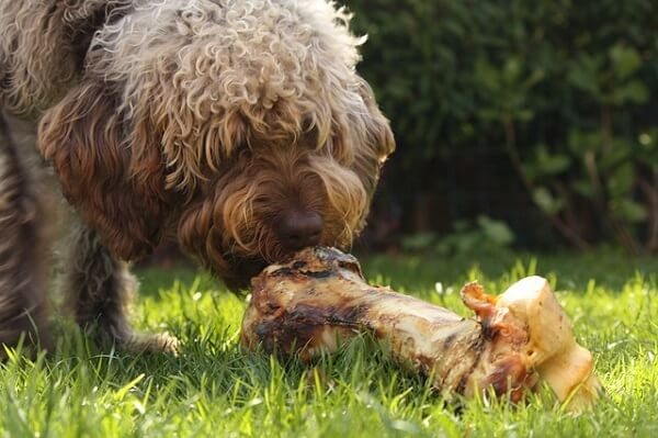 رژیم غذایی سگ های نژاد بزرگ