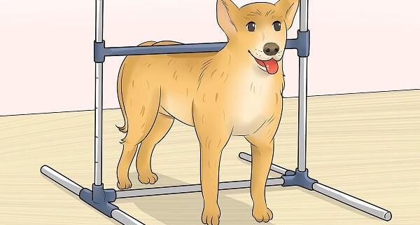 قد سگ