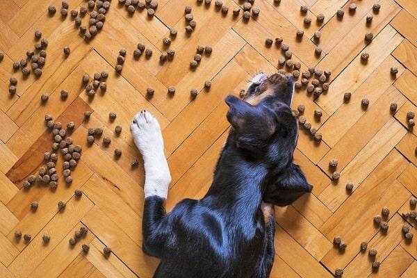 سگ در حال خوردن غذای خشک