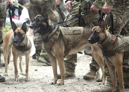 مالینویز های تربیت شده ارتش امریکا
