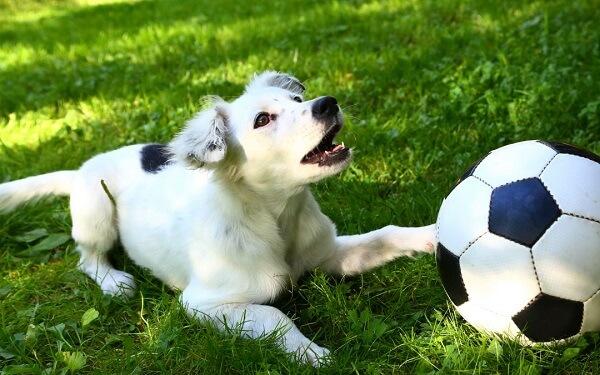بازی می تواند رفتارهای مخرب را در سگها کاهش دهد