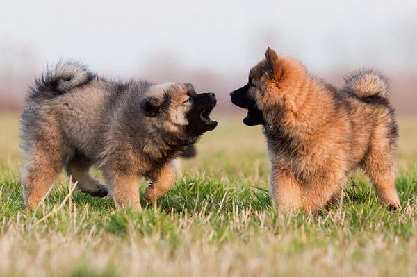 تفاوت بازی کردن سگ ها در مقابل مبارزه