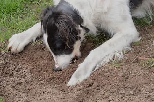 خطرات ناشی از خوردن خاک