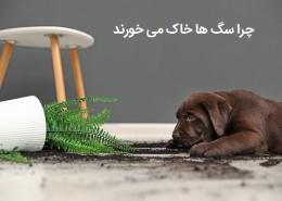 چرا سگ ها خاک می خورند؟