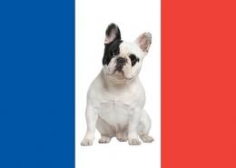سگ های متعلق به کشور فرانسه