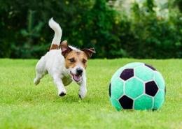 مزایای بازی با سگ