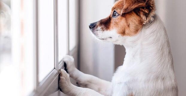 چگونه اضطراب جدایی سگ خود را کاهش دهیم